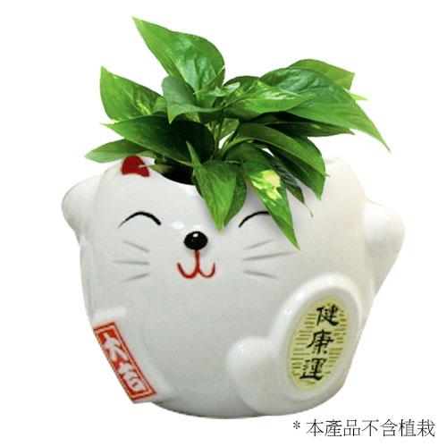 小開運貓花器-健康運(白)